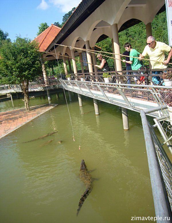 крокодилы кормим на удочке