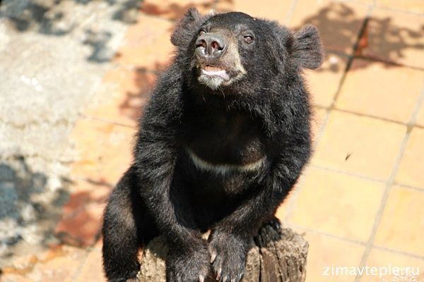 кормление медведей в Янг бэй
